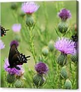 Spicebush Swallowtail Heaven Canvas Print