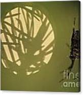 Spider And Sunlight Canvas Print