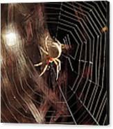 Spider - Building A Ferris Wheel Canvas Print