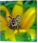 Spider Dew Flower Reflect Canvas Print