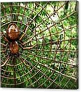 Spider In Its Web Canvas Print