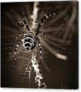 Spider In Waiting Canvas Print