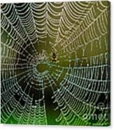 Spider In Web 3 Canvas Print