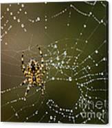 Spider In Web 5 Canvas Print
