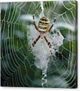 Spider On Its Web Canvas Print