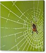 Spider Web With Dew Drops With Spider On Web Canvas Print