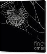 Spider's Web Canvas Print