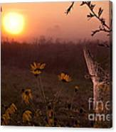 Spiderweb And Wildflowers Lit By Morning Sunrise Canvas Print