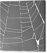 Spiderweb Bw Canvas Print