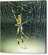 Spidey Busy At Work Canvas Print