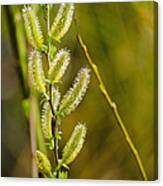 Spiky Green Plant Canvas Print