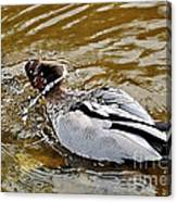 Spin Dry Duck Canvas Print