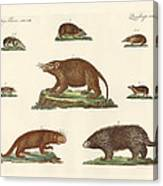 Spiny Animals Canvas Print