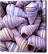Spiral Sea Shells Canvas Print