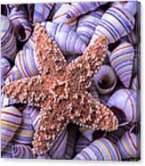 Spiral Shells And Starfish Canvas Print