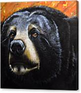 Spirit Of The Bear Canvas Print
