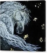 Spirit Of Wonder Canvas Print
