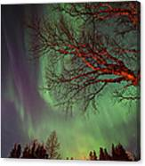 Spirits Of The Night    Canvas Print