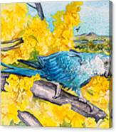 Spix's Macaw - A Dream Of Home Canvas Print