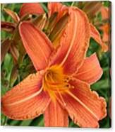 Splendid Day Lily Canvas Print