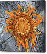 Split Sunflower Canvas Print
