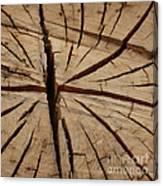Split Wood Canvas Print