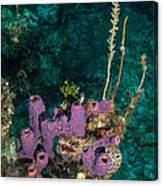Sponge Condo Canvas Print
