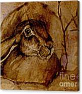 Spooked Hare Canvas Print