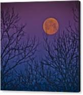 Spooky Beauty Canvas Print