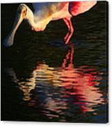 Spoonbill Island Reflection Canvas Print
