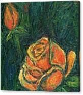 Spotlight Rose Canvas Print