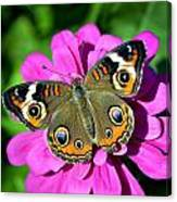 Spotted Butterfly On Pink Flower Canvas Print