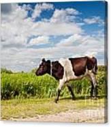Calf Walking In Natural Landscape  Canvas Print
