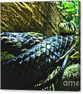 Spotted Coiled Snake Canvas Print