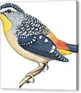 Spotted Diamondbird Canvas Print