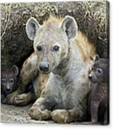 Spotted Hyena Mother And Pups Canvas Print