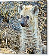 Spotted Hyena Pup In Kruger National Park-south Africa  Canvas Print