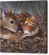 Spotted Innocence Canvas Print