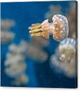 Spotted Jelly Aliens 1 Canvas Print
