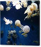 Spotted Jelly Fish 5d24952 Canvas Print