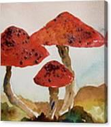 Spotted Mushrooms Canvas Print