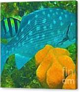 Spotted Surgeon Fish Canvas Print