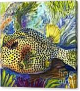 Spotted Trunkfish Canvas Print