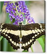 Spread Your Wings My Little Butterfly  Canvas Print