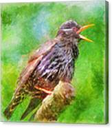 Spreading Bird Word Around Canvas Print