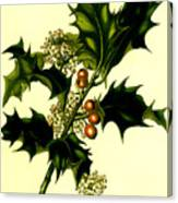 Sprig Of Holly With Berries And Flowers Vintage Poster Canvas Print
