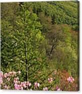 Spring Along The Blue Ridge Canvas Print