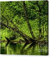 Spring Along West Fork River Canvas Print