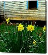 Spring At The Old Home Place Canvas Print