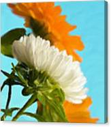 Spring Beauty Canvas Print